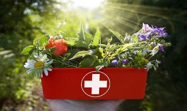 First Aid For Holistic Therapy Diploma