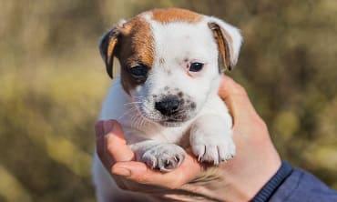 Finding Lost Animals using Animal Communication